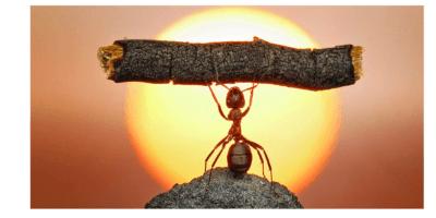 Fotografia de uma formiga levantada segurando um pedaço de graveto. Ao fundo o pôr do Sol.