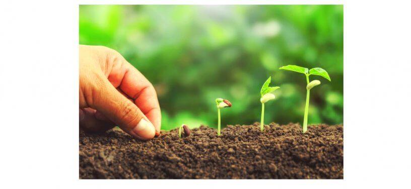 Imagem de uma mão plantado uma semente em um jardim.