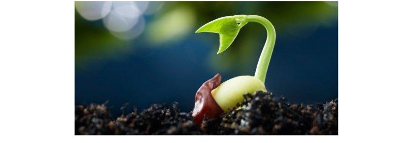 Imagem de uma semente brotando na terra.